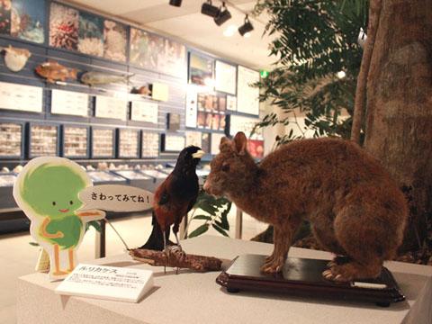 奄美博物館