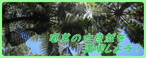 奄美の自然特集