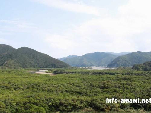 奄美市住用町 マングローブ原生林の風景