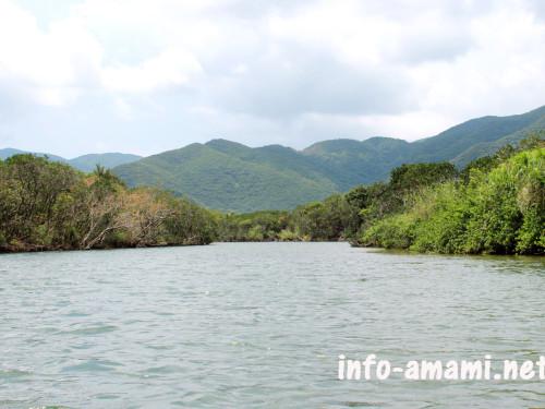 奄美市住用町 マングローブカヌーからの風景